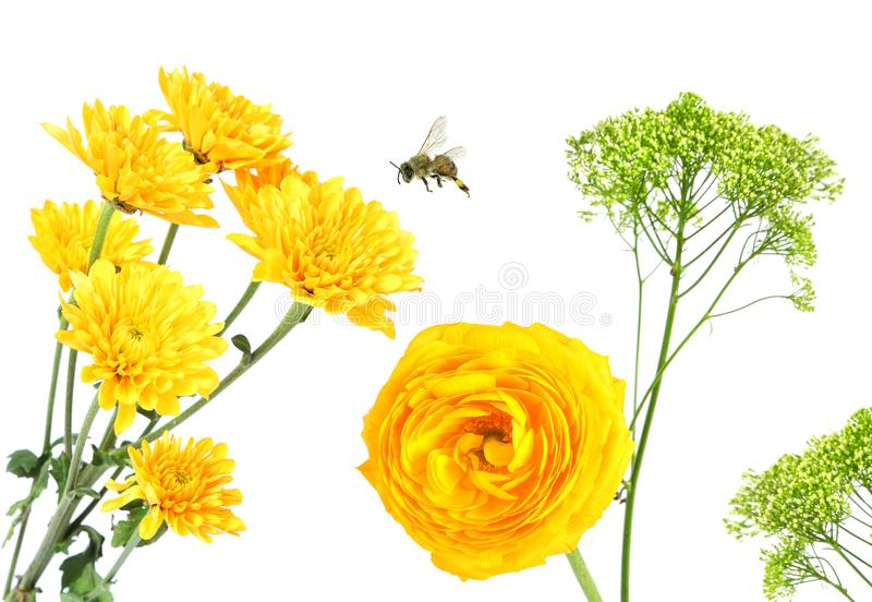 Beautiful yellow flowers. Buttercup and Daisy Aster. Honey bee flying royalty free stock images