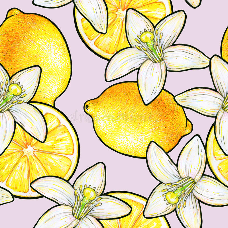 Beautiful yellow lemon fruits and white flowers citrus isolated on pink background. Flowers lemon doodle drawing. Seamless pattern royalty free illustration