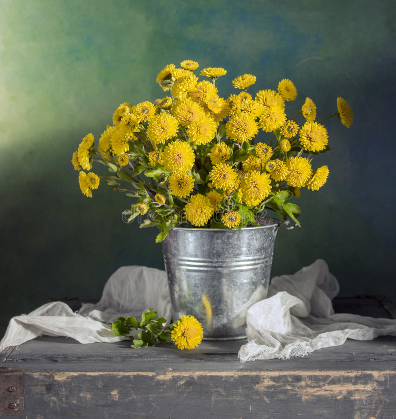 Beautiful yellow mums royalty free stock images
