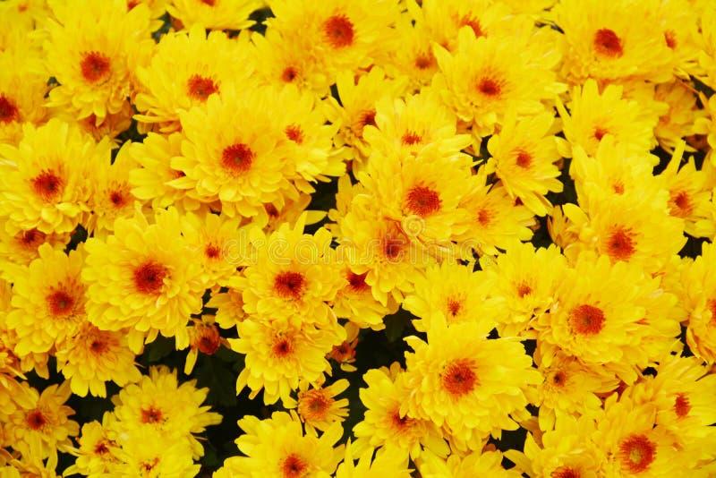 Beautiful fresh yellow orange flowers, petals, natural background, garden beauty stock image
