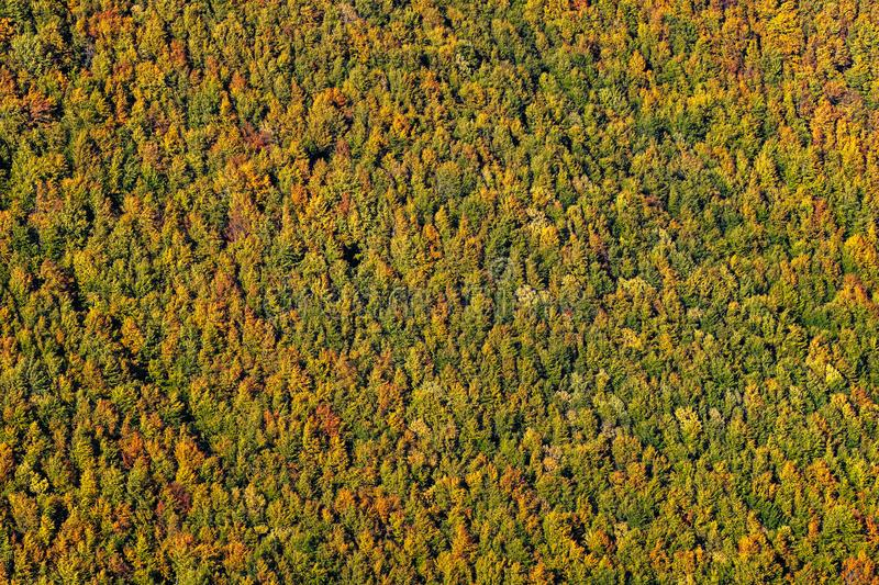 Beautiful yellow, orange and green autumn forest, many trees on the orange hills stock photo