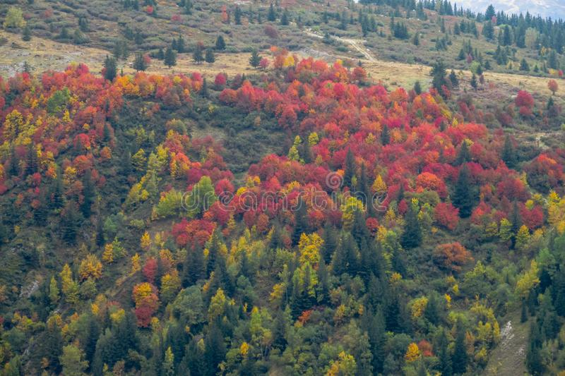 Beautiful yellow, orange green and red colors of autumn forest royalty free stock image