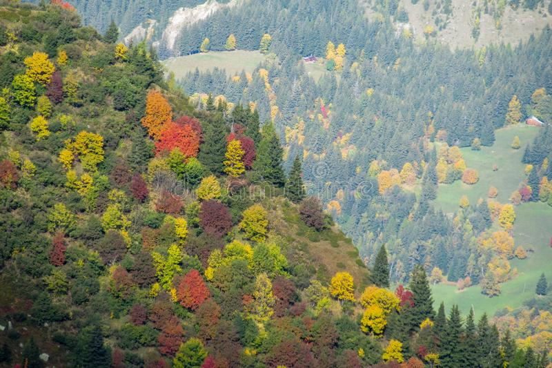Beautiful yellow, orange green and red colors of autumn forest royalty free stock photos