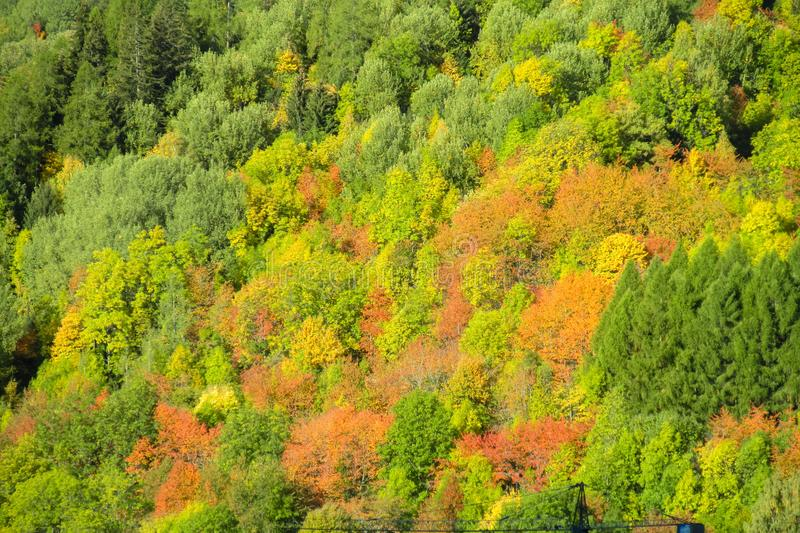 Beautiful yellow, orange green and red colors of autumn forest royalty free stock photo