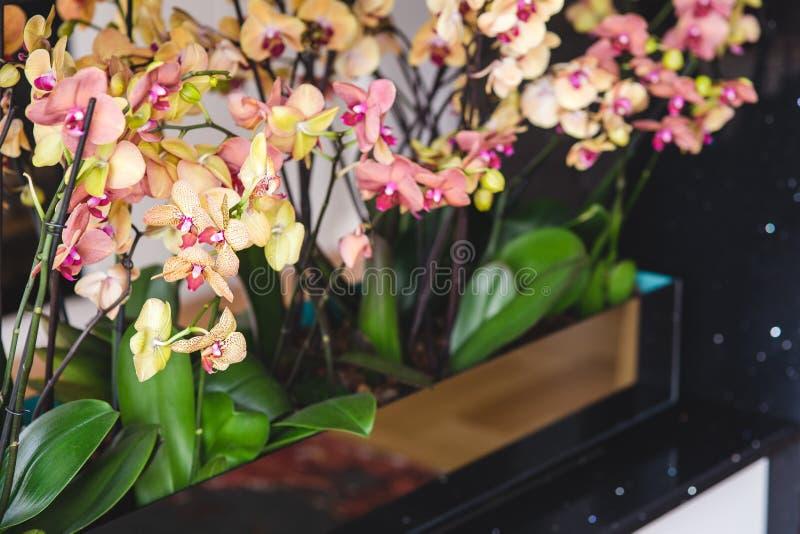 Beautiful yellow orchid flowers stock photo