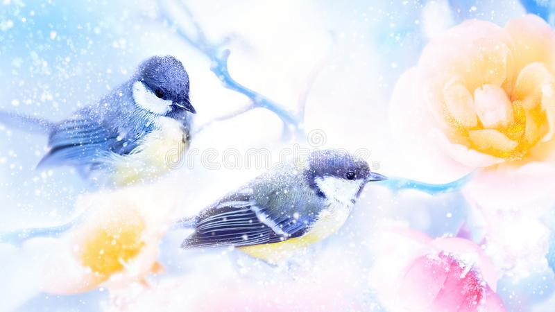Beautiful yellow and pink roses and tit birds in the snow and frost. Artistic winter natural image. Winter spring season. Beautiful yellow and pink roses and royalty free stock photo
