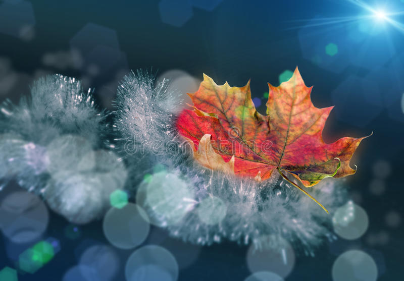 Beautiful yellow red green autumn maple leaf on a Christmas garland of tinsel with a nice blurred bokeh and soft blue background royalty free stock photo