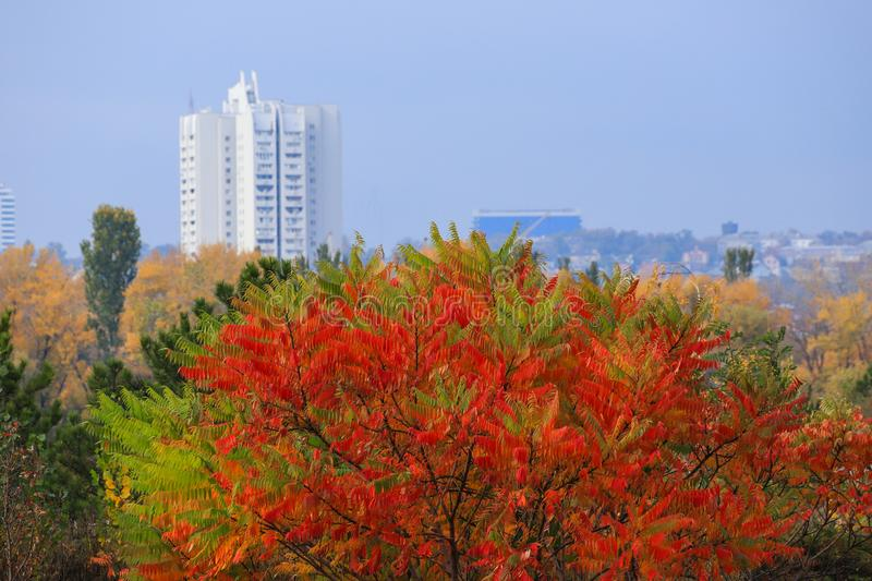 Beautiful yellow, red and green autumn tree on the background of a high white skyscraper in the fall in the Dnepr, Ukraine. Dnepropetrovsk, Dnipro stock photography