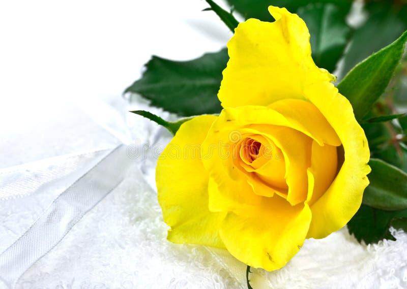 Download Beautiful yellow rose stock image. Image of cosmetics - 18692723