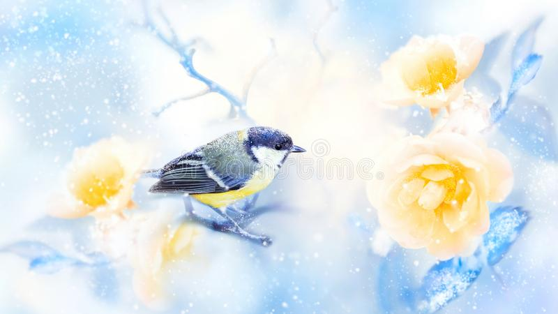 Beautiful yellow roses and tit bird in the snow and frost. Artistic winter natural image. Winter spring season. royalty free stock image
