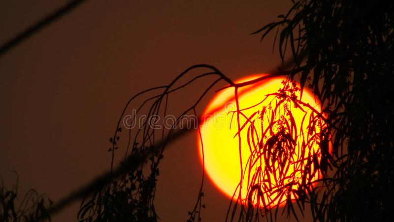 Beautiful Yellow sun behind the tree leaves. stock photos