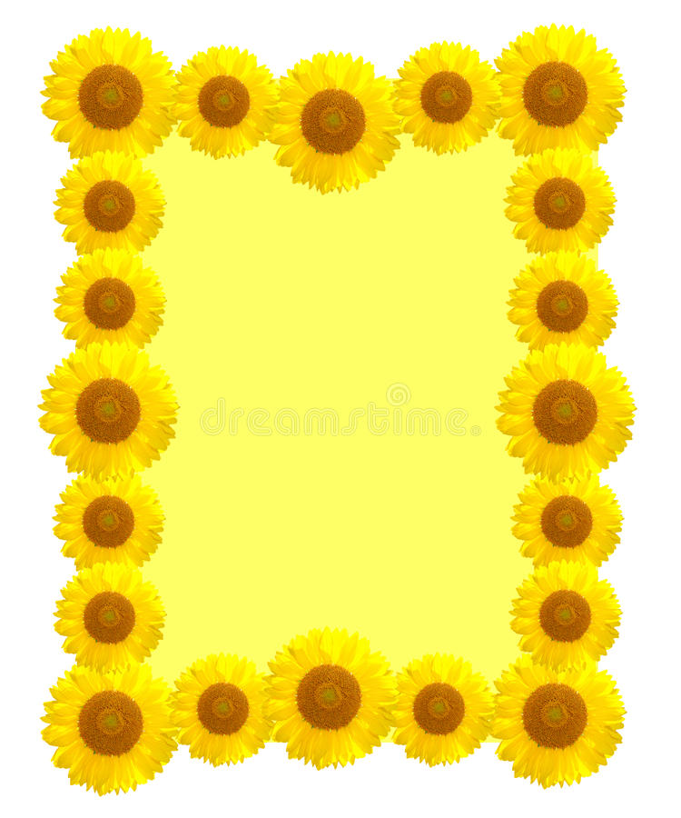 Beautiful yellow Sunflower frame royalty free stock images