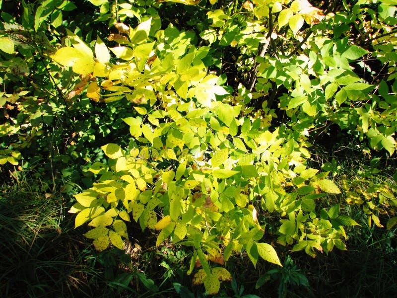 Autumn bush stock photo