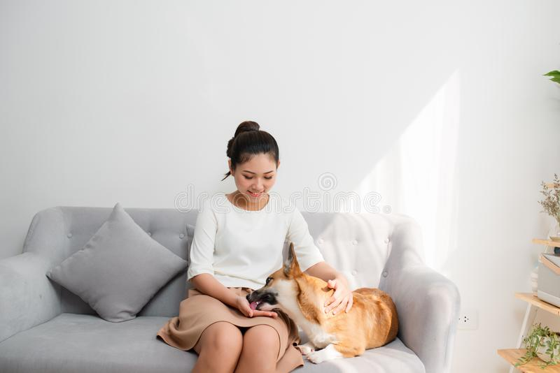 Beautiful young Asian girl playing with her Corgi dog at home sitting at sofa royalty free stock images
