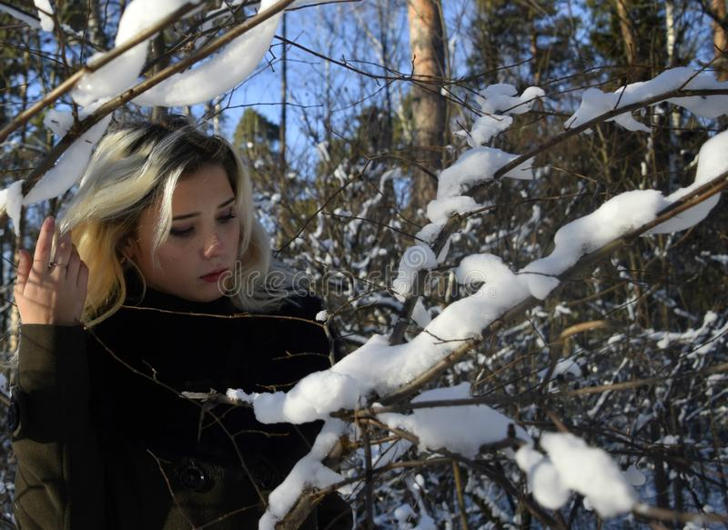 Portrait of a young woman in a snowy forest. Beautiful young blond girl, combing long hair, with downcast eyes stands with uncovered head in the winter brown royalty free stock image