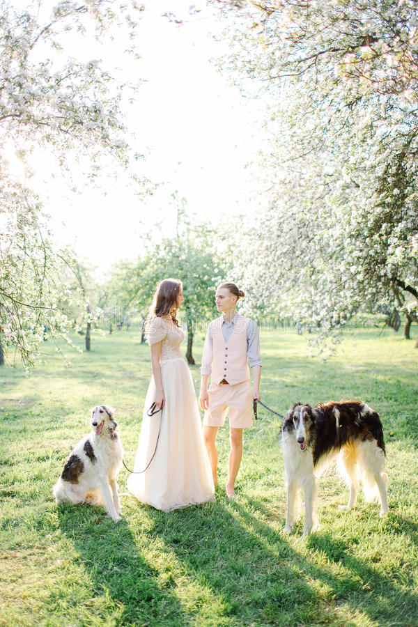 Beautiful young couple in wedding dress with greyhounds in park royalty free stock images