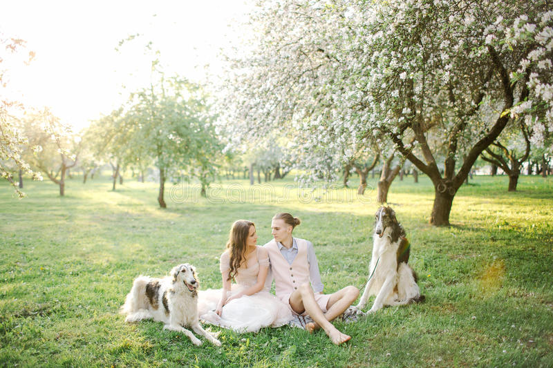 Beautiful young couple in wedding dress with greyhounds in park royalty free stock photos