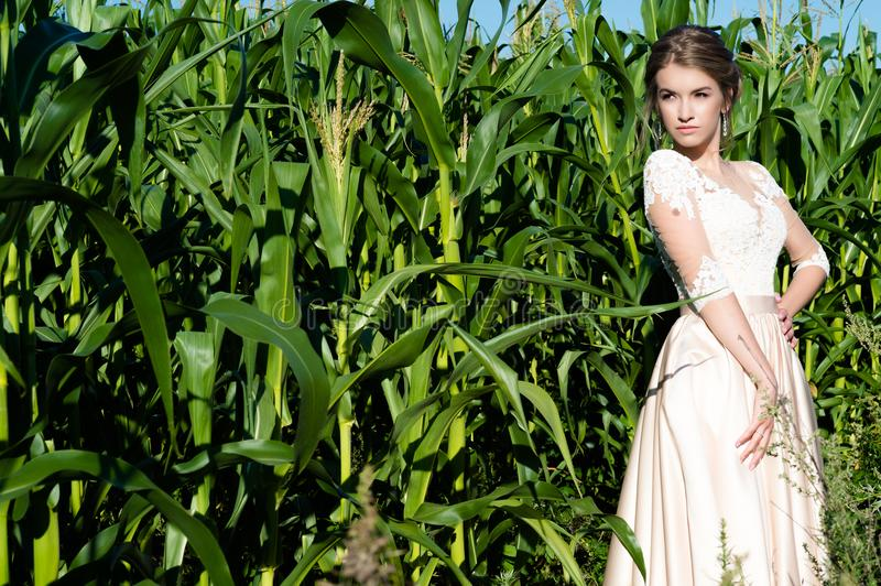 Beautiful young girl in beige dress in corn on field royalty free stock images