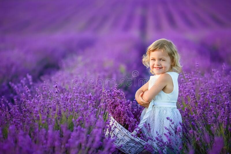 A Beautiful young girl outdoors portrait. kid in hat with basket flowers harvesting in lavender field Provence, at. Sunset stock image