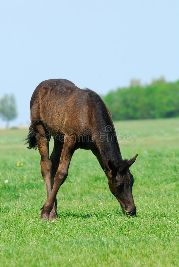 Beautiful young horse stock images