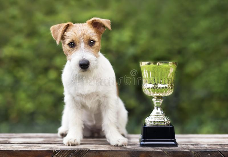 Beautiful jack russell dog sitting near a winner cup royalty free stock photo