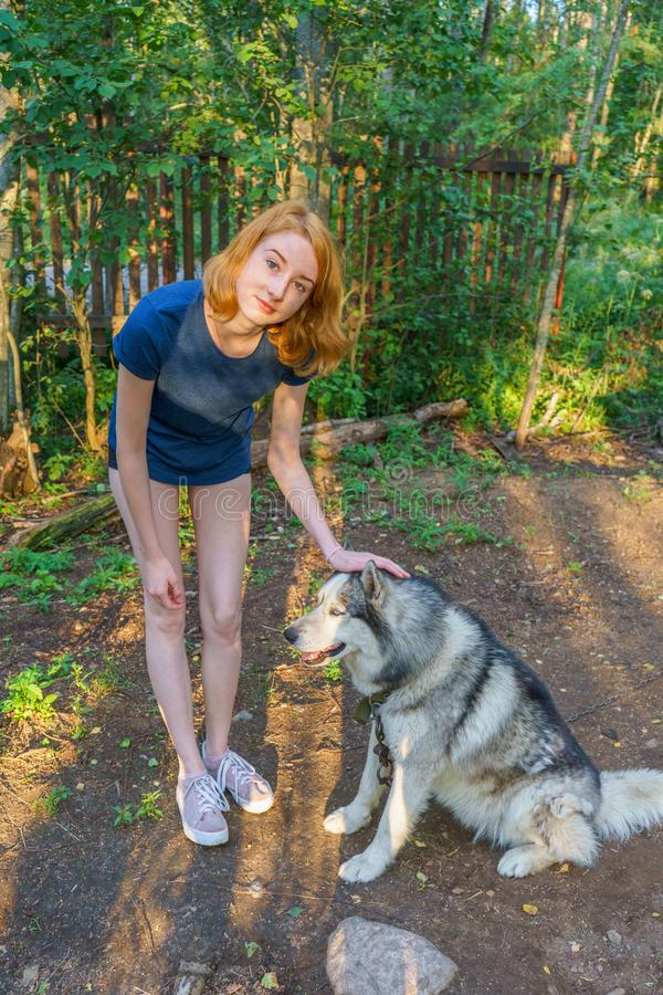 Beautiful young lady with her adorable cute dog of siberian hasky breed in summer forest at sunset. Happy teenage girl and pet. Authentic lifestyle moments royalty free stock images