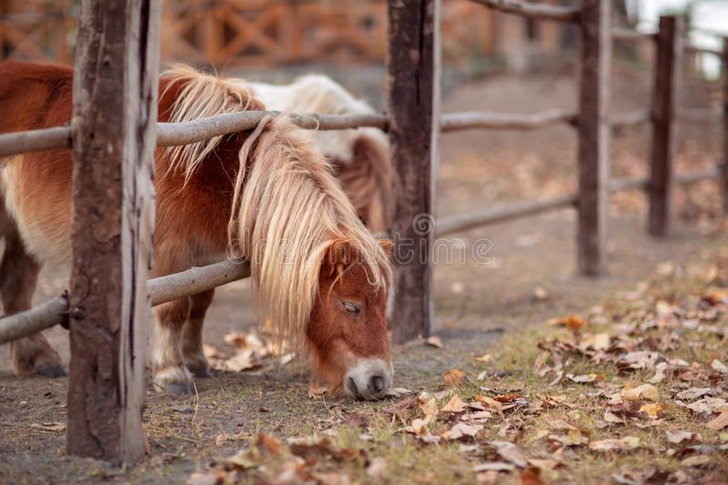 Beautiful young pony horse on a farm outdoors royalty free stock image