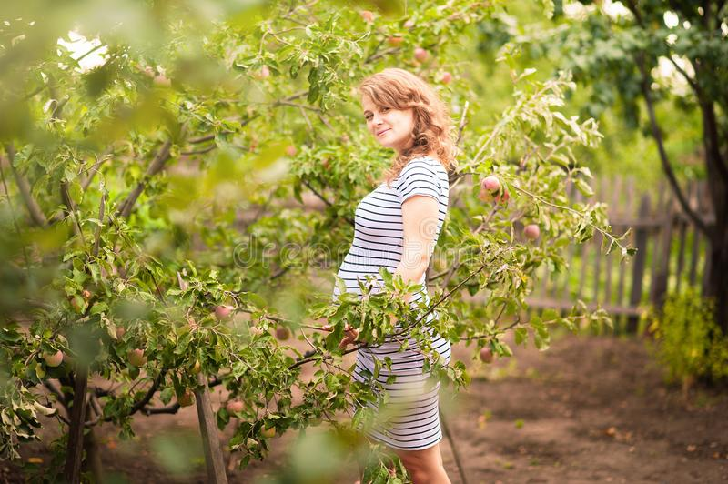 Beautiful young pregnant woman standing in summer in an apple orchard and eating apples royalty free stock photography