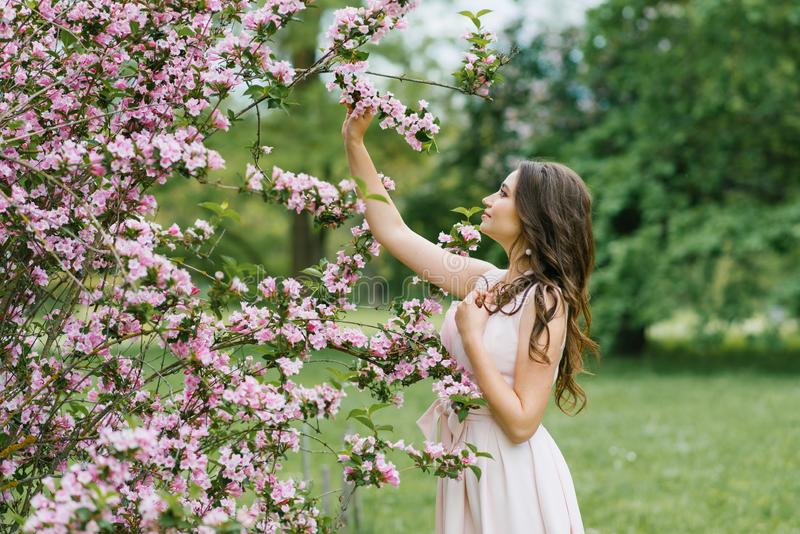A beautiful young pretty girl with long hair loose stands near the blooming spring Bush of weigela with pink flowers. She touches royalty free stock images