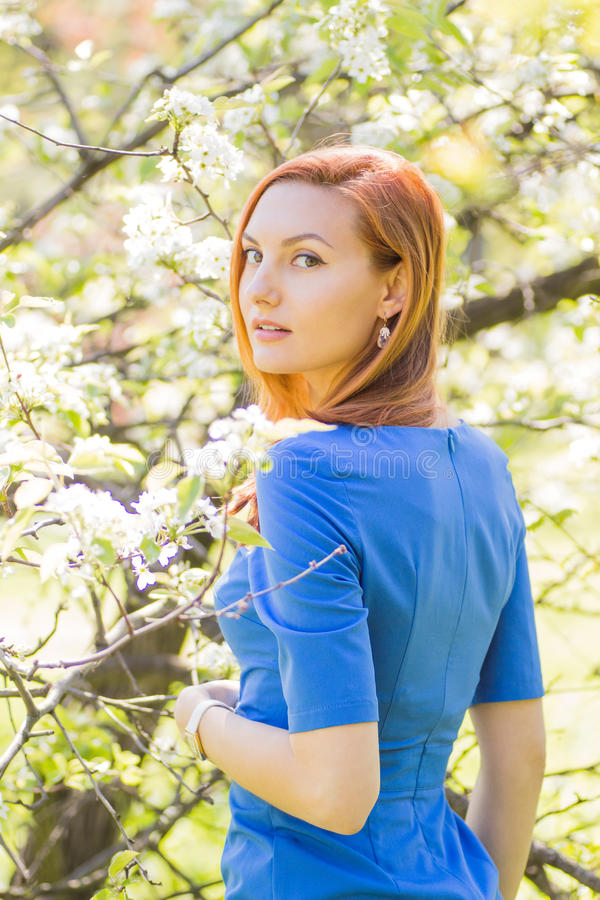 Beautiful young red-haired girl in blue dress among spring flowe. Rs in blossom apple tree garden stock image