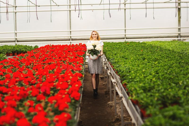 Beautiful young smiling girl in dress, worker with flowers in greenhouse. Girl holds white flowers.  royalty free stock photo