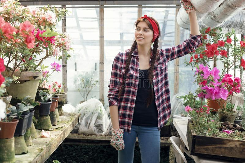 Beautiful young woman gardener with pigtails and red headband resting after hard work with spring flowers in greenhouse. Gardening and care of plants as hobby royalty free stock photo