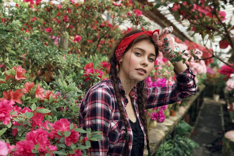 Beautiful young woman gardener with pigtails and red headband resting after hard work with spring flowers in greenhouse. Gardening and care of plants as hobby royalty free stock photos
