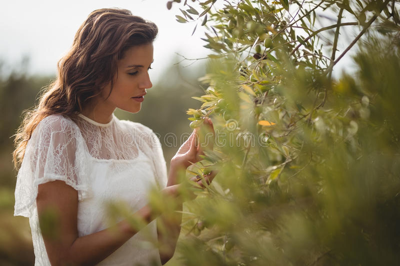 Beautiful young woman holding olive tree at farm stock photography