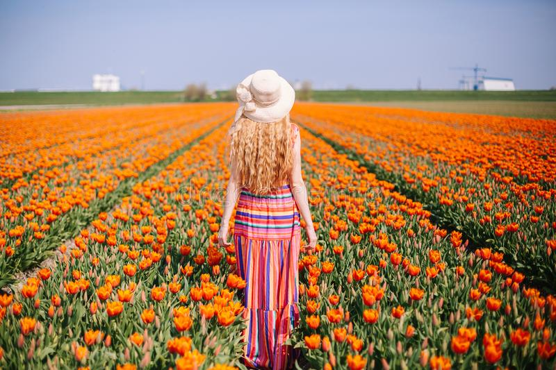 Beautiful young woman with long red hair wearing a striped dress and straw hat standing by the back on colorful tulip field royalty free stock images