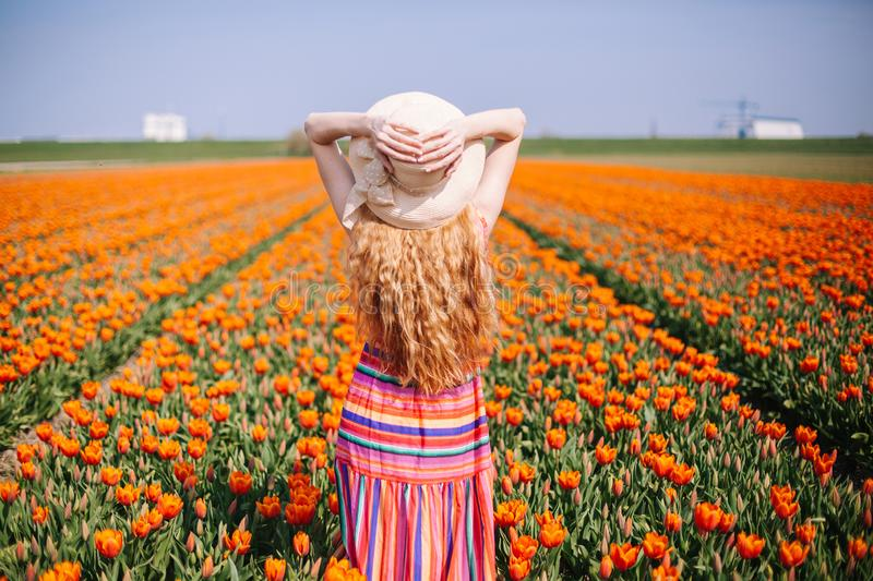 Beautiful young woman with long red hair wearing a striped dress and straw hat standing by the back on colorful tulip field stock photos