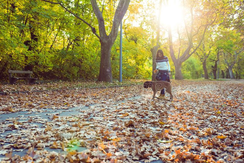 Beautiful young woman playing with her Dog in the forest stock image