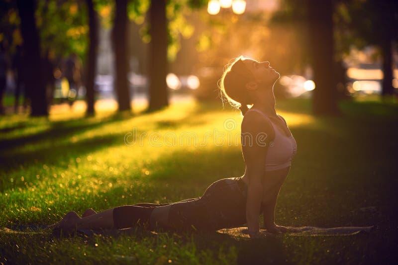 Beautiful young woman practices yoga asana upward facing dog in the park at sunset. Beautiful sporty fit yogini woman practices yoga asana upward facing dog in stock image