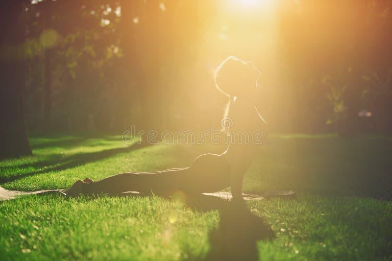 Beautiful young woman practices yoga asana upward facing dog in the park at sunset. Beautiful sporty fit yogini woman practices yoga asana upward facing dog in royalty free stock photos