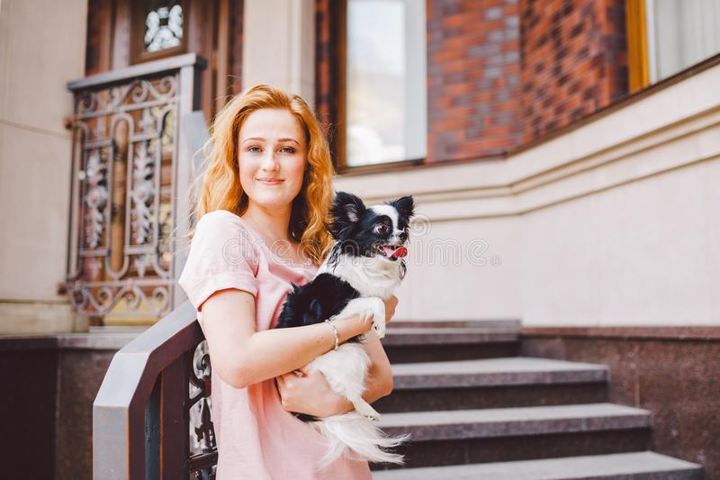 A beautiful young woman with red long hair is holding a small, cute funny big-eyed dog of two flowers, a black-and-white pet of th. E breed of hichuahua against royalty free stock photography