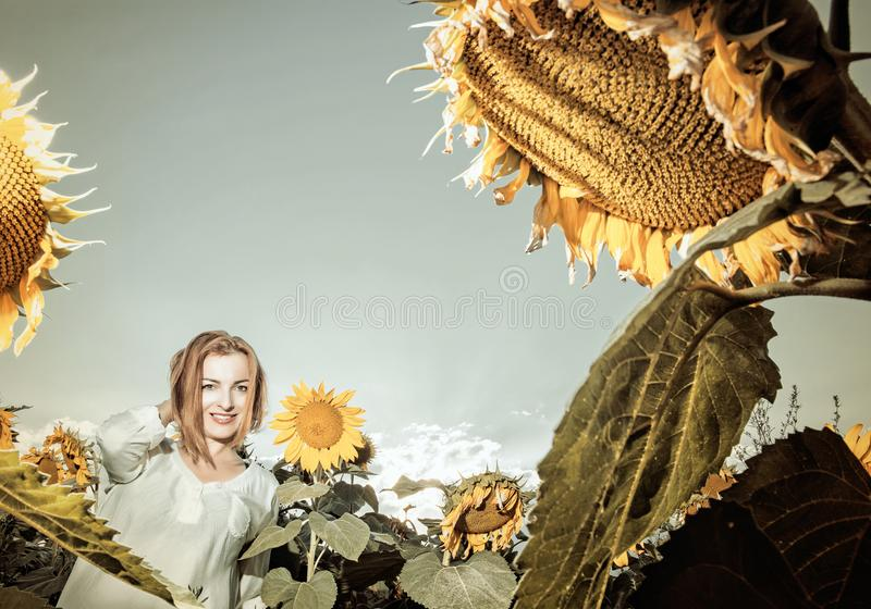 Beautiful young woman in sunflower field, vintage filter stock photography