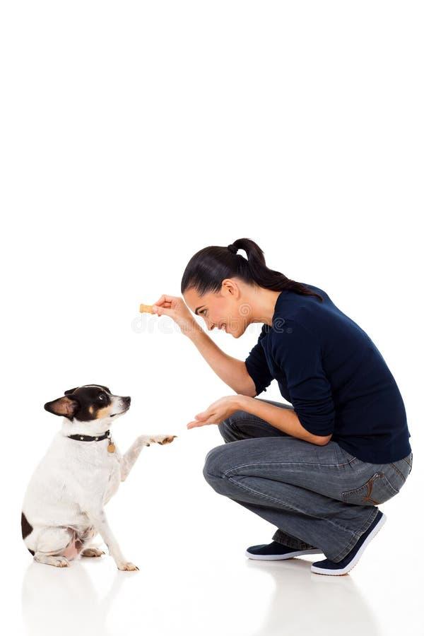 Woman training dog. Beautiful young woman training her dog stock photography