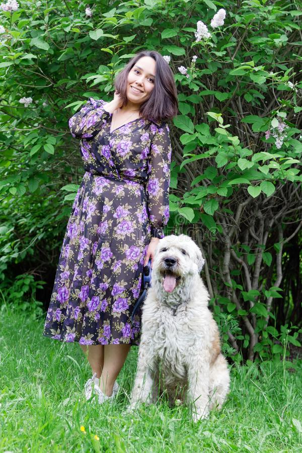 Beautiful young woman is walking with her South Russian Shepherd Dog in a summer park with blooming lilac bushes stock photo