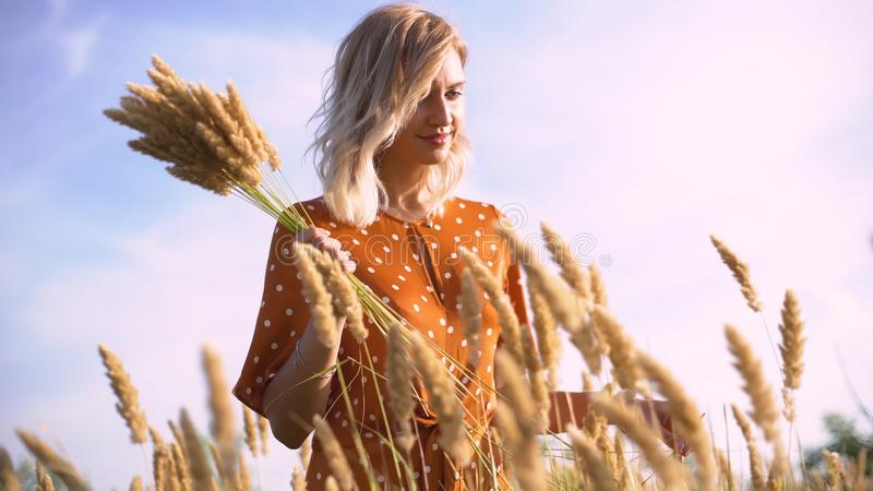 Beautiful young woman walks in the field collects a bouquet of flowers and spikelets. Portrait of attractive female on grass at su stock photo