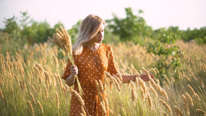 Beautiful young woman walks in the field collects a bouquet of flowers and spikelets. Portrait of attractive female on grass at su royalty free stock photography