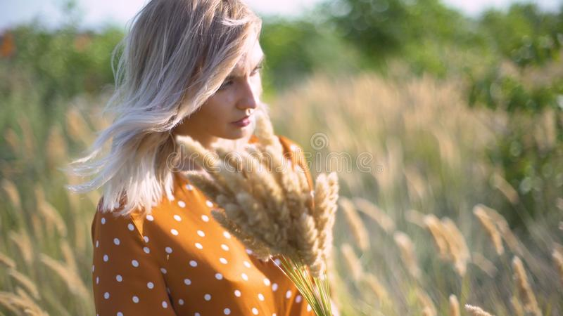 Beautiful young woman walks in the field collects a bouquet of flowers and spikelets. Portrait of attractive female on grass at su stock images