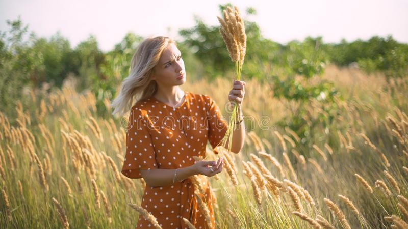 Beautiful young woman walks in the field collects a bouquet of flowers and spikelets. Portrait of attractive female on grass at su royalty free stock image