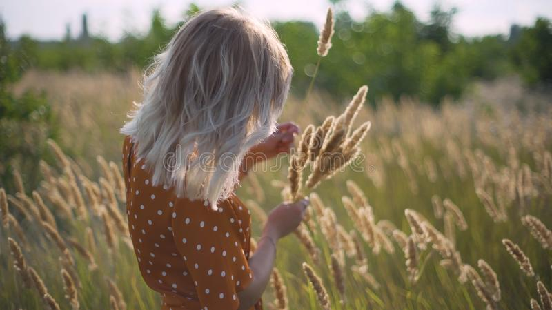 Beautiful young woman walks in the field collects a bouquet of flowers and spikelets. Portrait of attractive female on grass at su stock photography