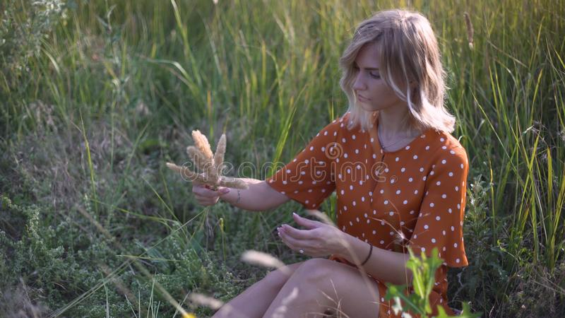 Beautiful young woman walks in the field collects a bouquet of flowers and spikelets. Portrait of attractive female on grass at su royalty free stock photos