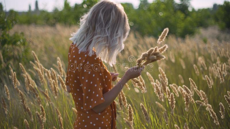 Beautiful young woman walks in the field collects a bouquet of flowers and spikelets. Portrait of attractive female on grass at su royalty free stock photo
